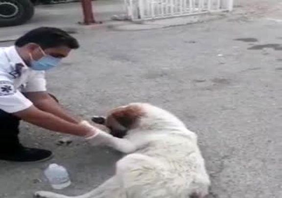 (ویدیو) ماجرای عجیب پناه بردن یک سگ به اورژانس باشت